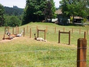 rural-fence
