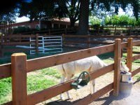 wood ranch fence with horse