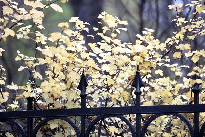 fall fence maintenance