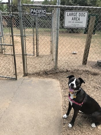 Dog Friendly Park Wire Fence installed by Pacific Fence in Portland OR
