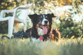 Dog Friendly Fence and Yard in Portland OR