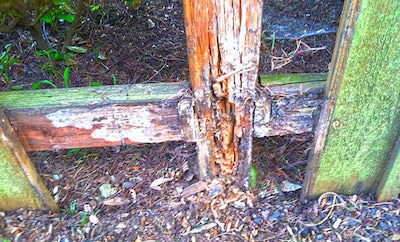 Rotten fence replacement Portland OR