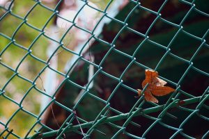 Leaf in green chain link fence