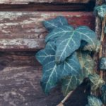 Best Climbing Plants For Wooden Fences