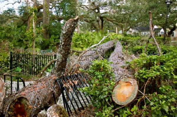 Damaged Fence 1