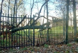 Read more about the article How to Plan for Buying or Repairing a Fence