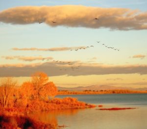 Birds Flying South over orange river