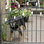 Dog Fence Aggression And How To Prevent It