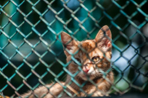 Can Cats Climb Chain Link Fences?